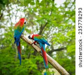 blue and red macaw sitting on... | Shutterstock . vector #235778293