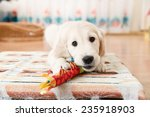 labrador retriever puppy... | Shutterstock . vector #235918903