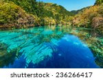 Azure Lake With Submerged Tree...