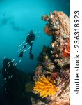 diver  feather star  coral reef ... | Shutterstock . vector #236318923