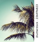 Closeup Of A Palm Tree Against...