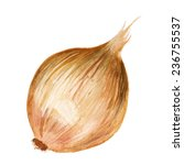 watercolor image of onion...