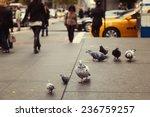 Pigeons On New York Street  Usa