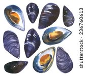 watercolor set mussels drawn by ... | Shutterstock .eps vector #236760613