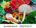 fly agaric  mushrooms  amanita... | Shutterstock . vector #236761117