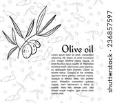 graphic olive branch and text... | Shutterstock .eps vector #236857597