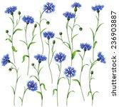 Blue Cornflowers Set Isolated...