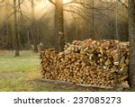 Firewood And Sunlit Mist