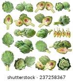 artichoke isolated on white... | Shutterstock . vector #237258367