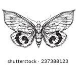 butterfly  sketch. detailed... | Shutterstock .eps vector #237388123