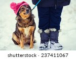 Dog Wearing Knitted Hat With...