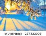Coniferous Branch Against A...
