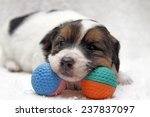 Lazy Dog Baby Lying On His Ball