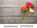 Three Colorful Gerbera Flowers...