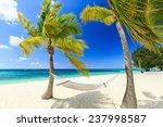 Hammock And Palm Trees At 7...