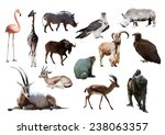 African animals. isolated on...