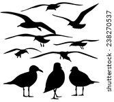 set of sea gull silhouette ... | Shutterstock .eps vector #238270537