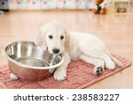 golden retriever puppy lying... | Shutterstock . vector #238583227