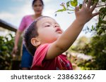 2 year old mixed race asian...   Shutterstock . vector #238632667
