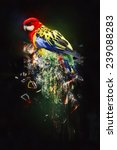 Parrot  Abstract Animal Concep...
