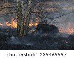 fire grass spring | Shutterstock . vector #239469997