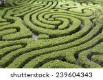 Ornamental Maze Cut Into Hedge...