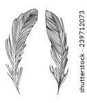 black and white feathers | Shutterstock .eps vector #239712073