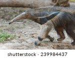 anteater | Shutterstock . vector #239984437