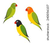 parrot. isolated birds on white ... | Shutterstock .eps vector #240056107