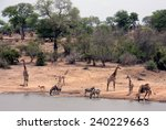 animals at a waterhole in... | Shutterstock . vector #240229663