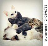 Stock photo puppy and kitten sleeping 240396793
