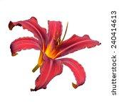 Red Daylily  Hemerocallis ...