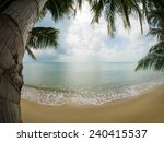 coconut tree on the beach in... | Shutterstock . vector #240415537