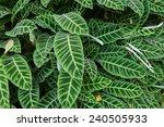 green leaf background  | Shutterstock . vector #240505933