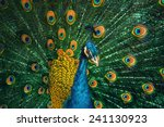 portrait of the peacock during... | Shutterstock . vector #241130923