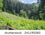 majestic mountain landscapes of ... | Shutterstock . vector #241190383
