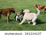 group of dogs playing outdoors | Shutterstock . vector #241214137