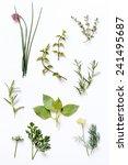 fresh herbs | Shutterstock . vector #241495687