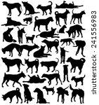 Stock vector collection of editable vector silhouettes of a motley group of bangkok street dogs 241556983