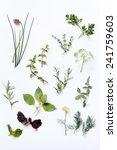 fresh herbs | Shutterstock . vector #241759603