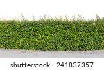green hedge or green bush... | Shutterstock . vector #241837357