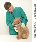 vet examining an red toy poodle | Shutterstock . vector #242136733