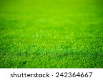 Grass Field Defocused...