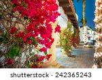 flowering california. beautiful ...   Shutterstock . vector #242365243