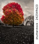 lonely colorful tree at the... | Shutterstock . vector #242549623