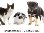 kitten and puppy on a white... | Shutterstock . vector #242598403