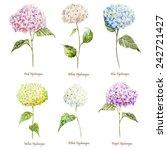 Hydrangea  Watercolor  Flowers...