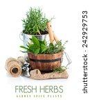 fresh green herbs with garden... | Shutterstock . vector #242929753