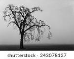 Spooky Lone Tree On A Fog...