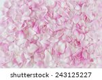 Rose Petals Isolated On White...